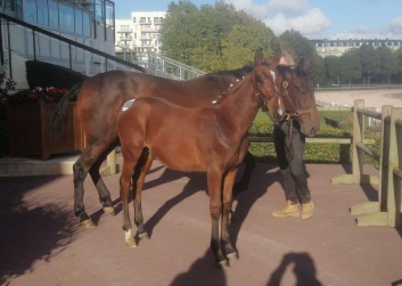 Ventes de foals : 3 sujets se partagent les honneurs