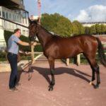 Idao de Tillard adjugé 27 000 €