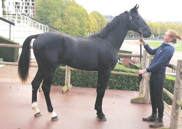 Igor du Regency, top price à 29 000 €