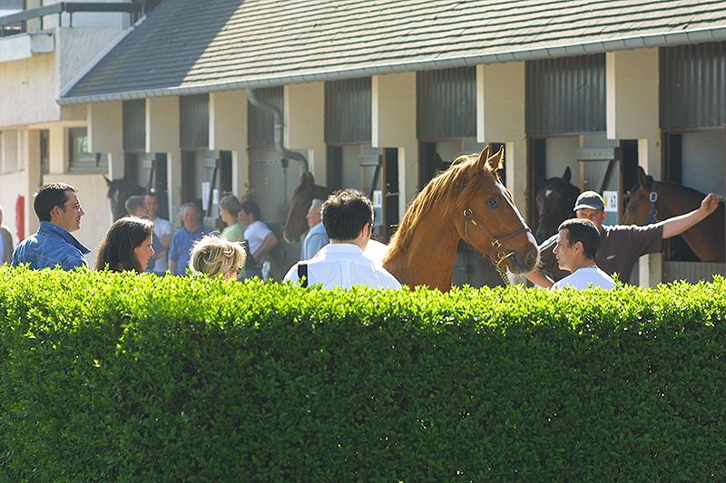 Franchissement de la barre des 500 yearlings