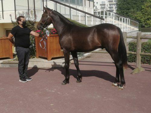 19 000 € pour Kaïd d'Eri, plus belle enchère du 3ème rendez-vous
